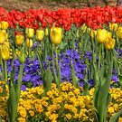 Spring Flowers at Centennial Park, Nashville, Tennessee by WandaKrack