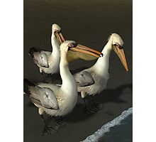 Brown Pelicans Photographic Print
