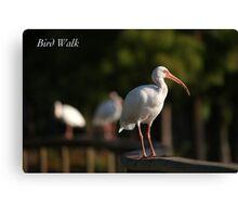 Bird Walk Canvas Print