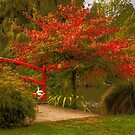 Autumn Flare by Belinda Osgood