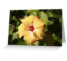 Butterscotch Hibiscus Greeting Card