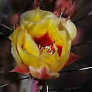 Petals and Thorns by rrushton