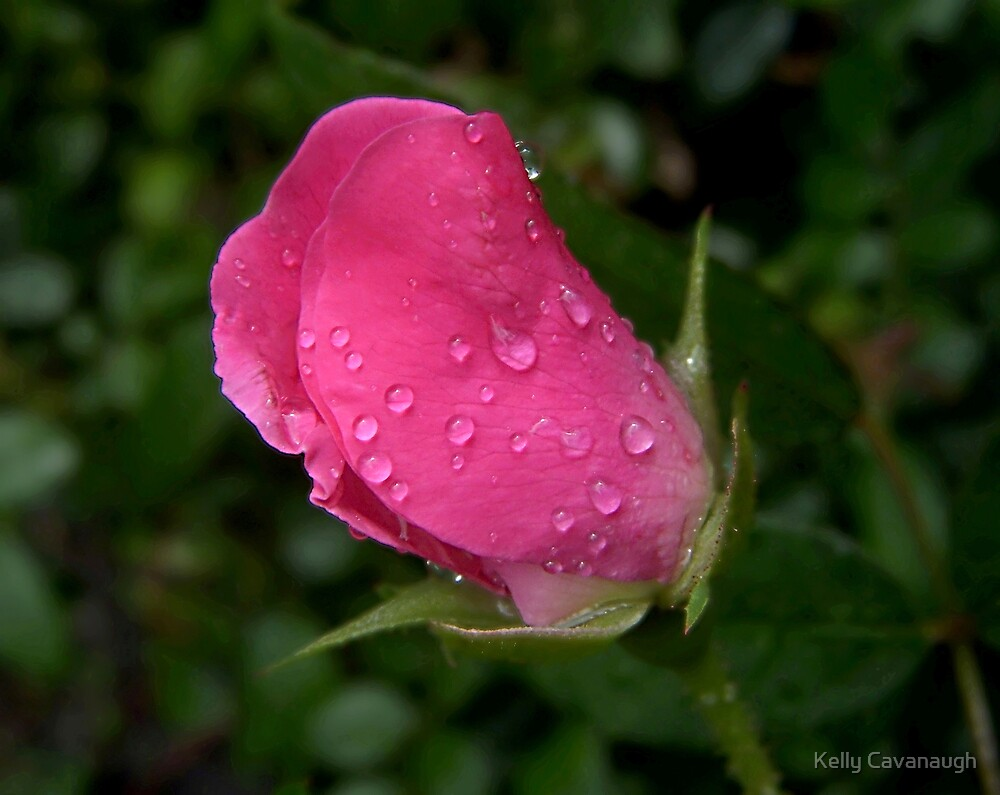 After the Rain by Kelly Cavanaugh