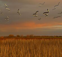 Flying snakes over the prairie by alextomlinson