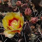 First Blossom by rrushton