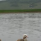Sitting duck! by ybandey