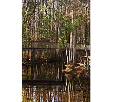 Okefenokee Swamp Photographic Print