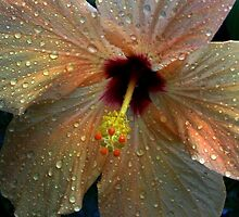 Hybiscus after the rain by ienemien