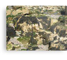 Seaweed on Rocks Metal Print