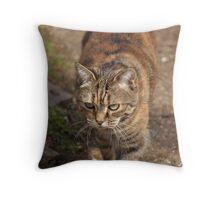 Razzle on the prowl Throw Pillow