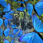 blue butterflies by mxsara
