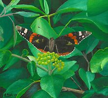 red admiral - green eyes by Richard Paul