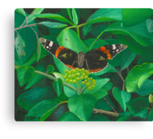 red admiral - green eyes Canvas Print