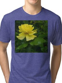 Yellow Rose Pearls Tri-blend T-Shirt