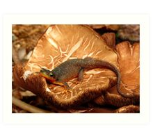 poisonous and protected...rough skinned newt Art Print