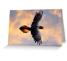 Red Tail Black Cockatoo - Flight Greeting Card