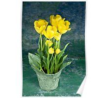 Sunshine Yellow Tulips Poster