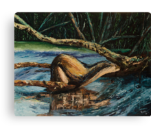 Otter on river branch  Canvas Print