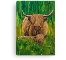 Scottish Highland Cow with Calf Canvas Print