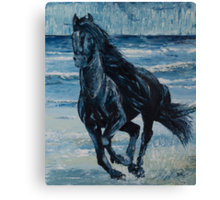 Wild horse on Seashore Canvas Print