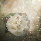 Rhododendron Sparkle by Lynn Bolt