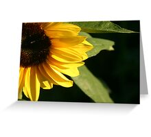 In the abscence of sunshine Greeting Card