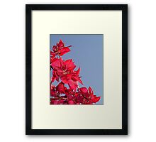 Pink Red Blooming Bougainvilleas Against A Blue Sky Framed Print