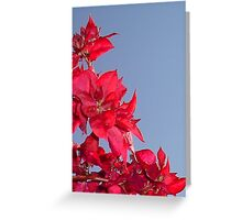 Pink Red Blooming Bougainvilleas Against A Blue Sky Greeting Card