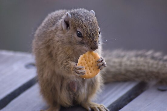 A BISCUIT A DAY...? by Magaret Meintjes