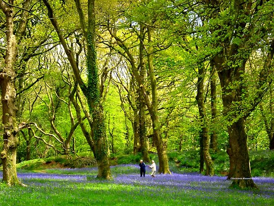 Never Too Old - to Play Amongst Bluebells by Charmiene Maxwell-Batten