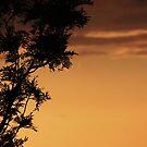 Orange Sky by Diana Forgione