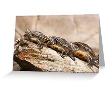 Turtles in a row Greeting Card