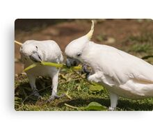 cockatoo parrot on its perch Canvas Print