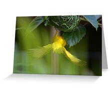 Golden Palm Weaver 4 Greeting Card