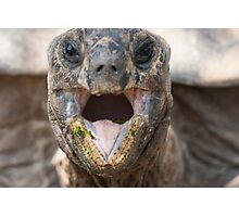 turtle eating Photographic Print