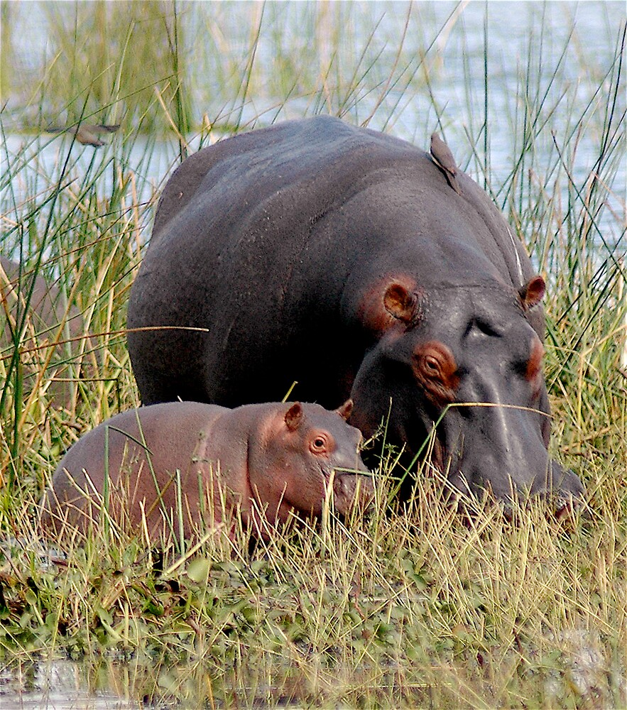 Mother & Baby by DUNCAN DAVIE