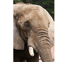 elephant in the jungle Photographic Print