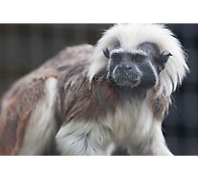 gibbon in the jungle Photographic Print