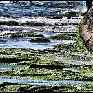 Green marine by Lior Goldenberg