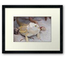 iguana in the jungla Framed Print