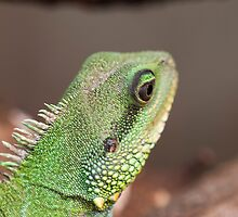 green lizard by spetenfia