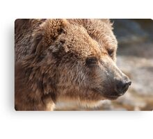 bear in the forest Canvas Print