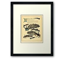 The Buckle My Shoe Picture Book by Walter Crane 1910 52 - Eight Peacocks in the Air Framed Print