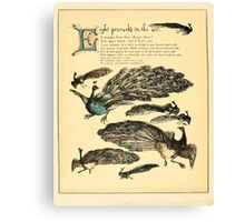 The Buckle My Shoe Picture Book by Walter Crane 1910 52 - Eight Peacocks in the Air Canvas Print