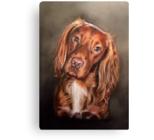 Bailey Canvas Print