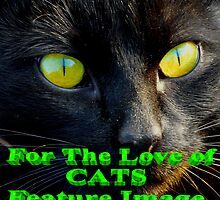 For the Love of Cats Banner by MaeBelle