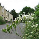 flower path by ybandey