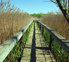 Boardwalk over the Trinity River Bog by plsphoto