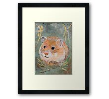 Golden Hamster Framed Print