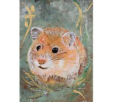 Golden Hamster Photographic Print
